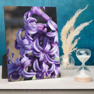 Pale Purple Hyacinth Photo Plaques