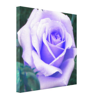 Pale Purple Rose Wrapped Canvas Print