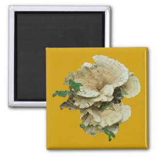 Pale Shelf Fungus Coordinating Items 2 Inch Square Magnet