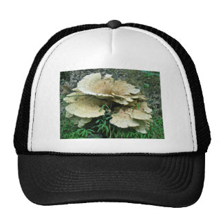 Pale Shelf Fungus Coordinating Items Trucker Hat