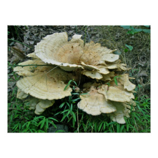 Pale Shelf Fungus Coordinating Items Poster