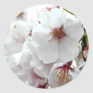 Pale Spring Classic Round Sticker