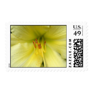 Pale Yellow Asiatic Lily Closeup Stamp