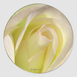 Pale Yellow Beige Rose Bud Sticker