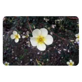 Pale yellow flower rectangular magnets