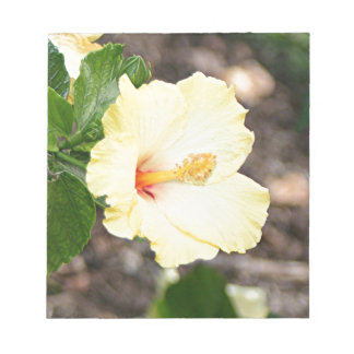 Pale yellow hibiscus flower 2 notepad
