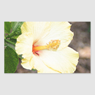 Pale yellow hibiscus flower 2 rectangular sticker