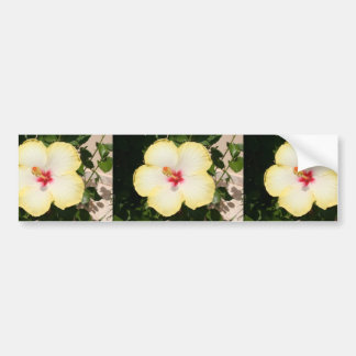 Pale Yellow Hibiscus Flower - Front View Bumper Sticker