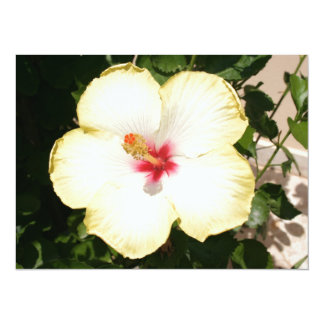 Pale Yellow Hibiscus Flower - Front View Card
