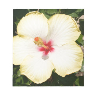 Pale Yellow Hibiscus Flower - Front View Notepad