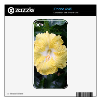 Pale yellow hibiscus flower iPhone 4 decal
