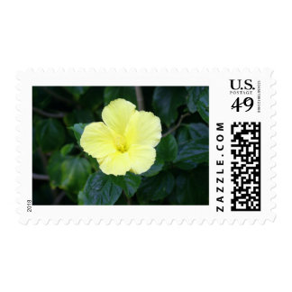 Pale Yellow Hibiscus Stamps