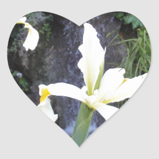 Pale Yellow Irises Heart Sticker