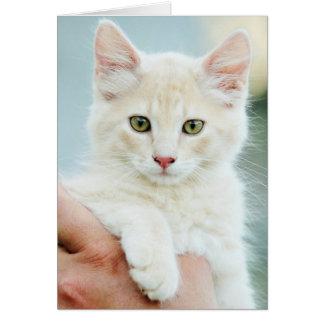 Pale Yellow Kitten Greeting Card