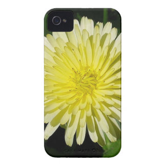 Pale Yellow Mary Bud Marigold With Garden Backgrou iPhone 4 Case