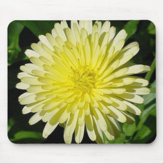 Pale Yellow Mary Bud Marigold With Garden Backgrou Mouse Pad