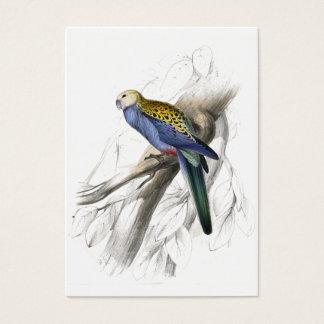 Paleheaded Parrakeet by Edward Lear Business Card