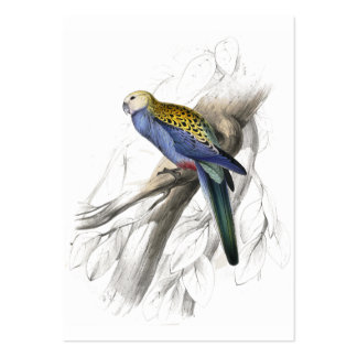 Paleheaded Parrakeet by Edward Lear Large Business Card