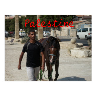 Palestinian Knight Postcard
