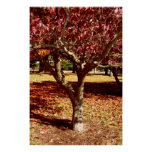 Paleta del otoño poster