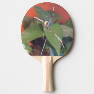 Paleta del ping-pong de la araña del orbe pala de tenis de mesa