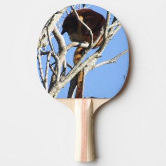 Paleta del ping-pong del canguro de árbol pala de ping pong