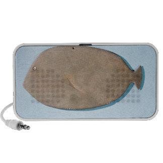 Paleta en la forma de un pescado iPod altavoces