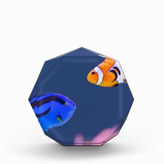 Palette surgeonfish and clown fish swimming award