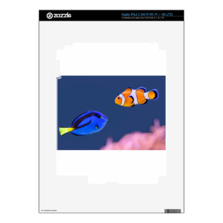 Palette surgeonfish and clown fish swimming decal for iPad 3