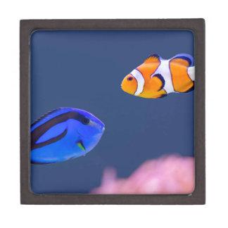Palette surgeonfish and clown fish swimming keepsake box