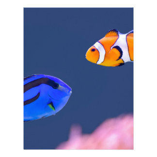Palette surgeonfish and clown fish swimming letterhead