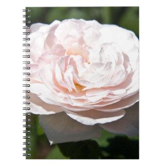 Palidezca - color de rosa rosado libreta