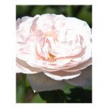 Palidezca - color de rosa rosado membrete personalizado