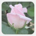 Palidezca - color de rosa rosado calcomanías cuadradas