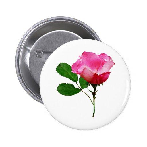 Palidezca - el capullo de rosa rosado pin