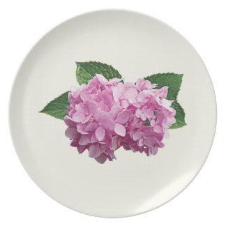 Palidezca - el Hydrangea rosado Plato De Comida