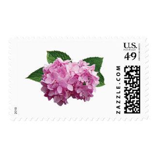 Palidezca - el Hydrangea rosado Sellos Postales