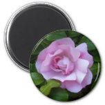Palidezca - el imán color de rosa rosado