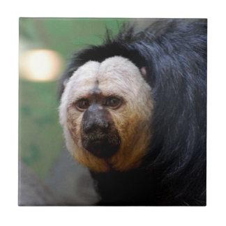 Palidezca el mono hecho frente de Saki Azulejo Cuadrado Pequeño