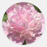 Palidezca - el Peony rosado Pegatinas Redondas