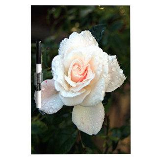 Palidezca - el rosa y color de rosa poner crema y pizarras