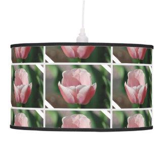 Palidezca - el tulipán rosado