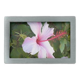 Palidezca - la flor rosada del hibisco en la hebilla cinturón rectangular