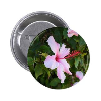 Palidezca - la flor rosada del hibisco en la pin redondo 5 cm