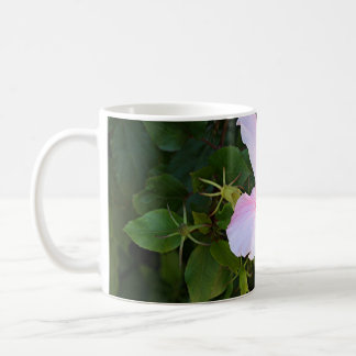 Palidezca - la flor rosada del hibisco en la taza de café