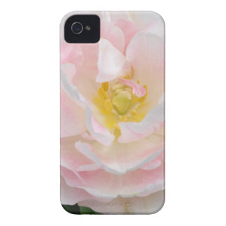 Palidezca - la flor rosada del tulipán Case-Mate iPhone 4 cárcasa