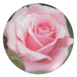 Palidezca - la placa de colector color de rosa ros plato de comida