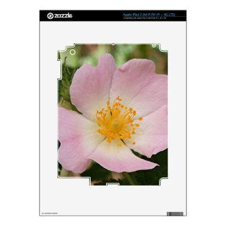 Palidezca - la sola flor color de rosa rosada y pegatina skin para iPad 3