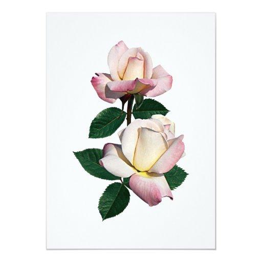 Palidezca - la variedad rosada de los capullos de invitación