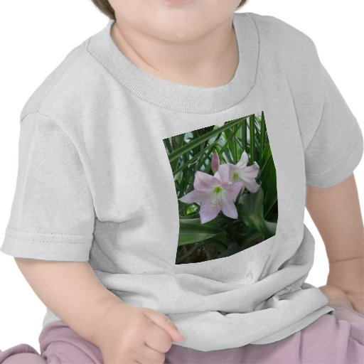 Palidezca - los lirios rosados 3 de Crinum Camiseta